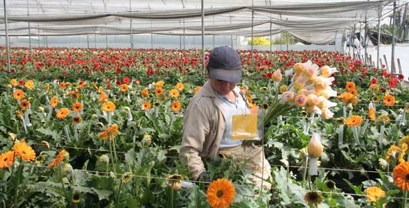 Abc econom a floricultores preocupados por los efectos for Viveros forestales en colombia